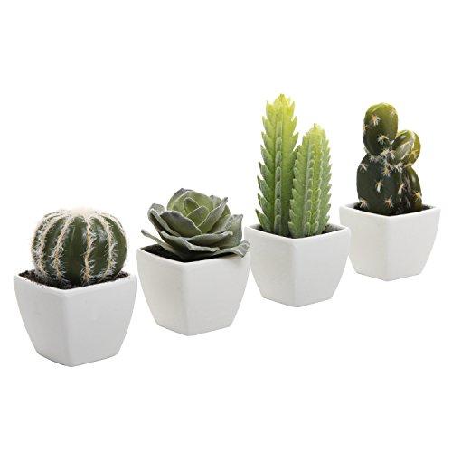 The 8 best cactus plants in pots