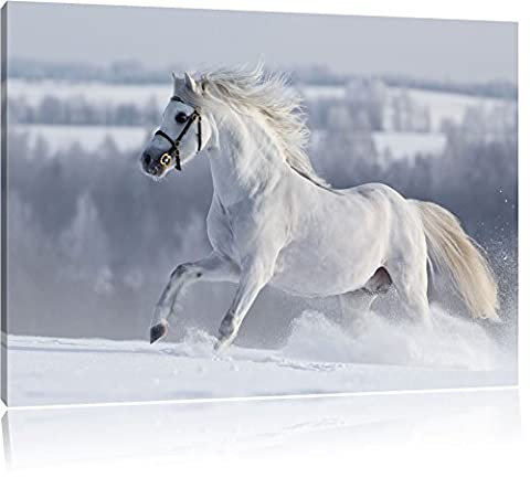 Pixxprint White Horse In Snow Meadow On Canvas, XXL Huge Pictures Completely Framed With Stretcher, Art Print On Mural With Frame Size: 80x60 - Snow White Pictures