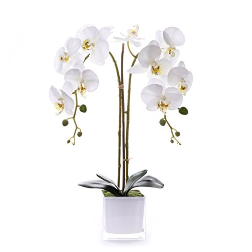 Livilan Silk Butterfly Orchid in Mirrored Vase Tall Artificial Flower Arrangements for Home Room Office Wedding Party Centerpiece Decor, White