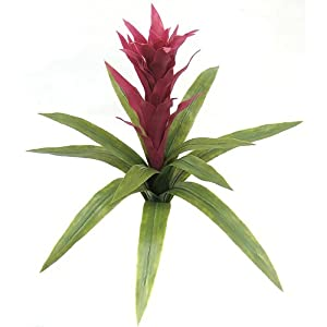 "SilksAreForever 22"" UV-Proof Outdoor Artificial Bromeliad Plant Flower Bush -Fuchsia (Pack of 2) 56"
