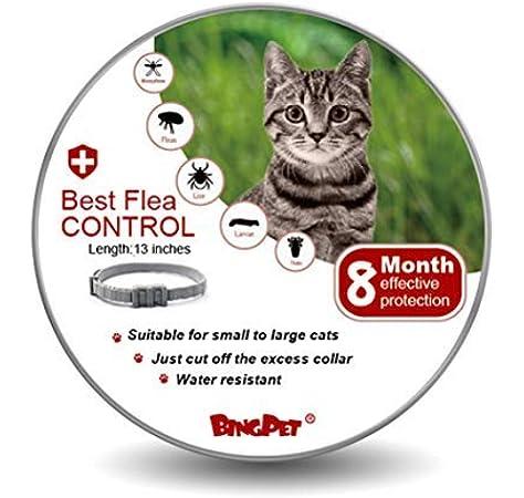 Collar de pulgas y garrapatas BingPET para gato – 8 meses de protección ajustable – Mejor tratamiento de control de pulgas para gatitos: Amazon.es: Hogar