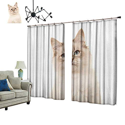 PRUNUS Decorative Curtains has Hook Pretty rag Doll Baby cat Kitten Blue Eyes Machine Washable for Easy Care,W96.5 xL108 ()