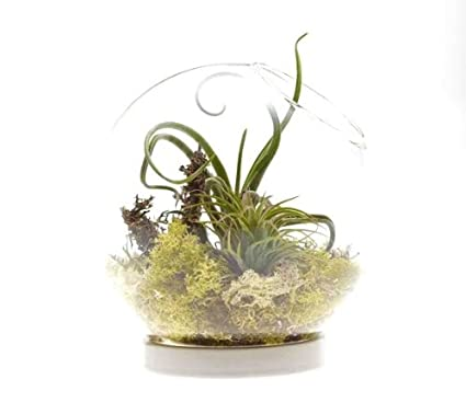 Amazon Com Chive Hudson Glass Plant Terrarium With White Ceramic