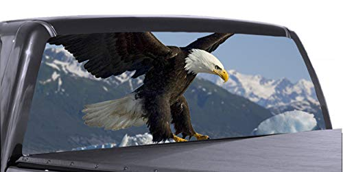 bald eagle window tint - 3