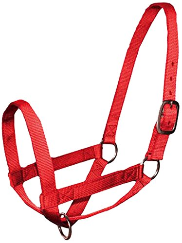 - Derby Nylon Cattle Halters Barn and Turnout in Calf, Cow, Heifer, Steer, Newborn Sizes