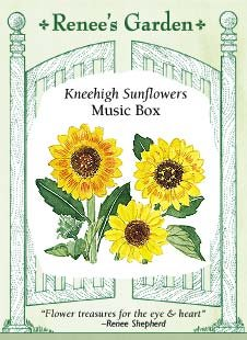 Sunflower - Musicbox Seeds