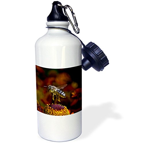3dRose Danita Delimont - Insects - Honey Bee flying over flowers, Insect - NA02 AMR0005 - Andres Morya Hinojosa - 21 oz Sports Water Bottle (wb_140055_1)