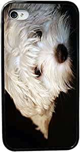 Rikki KnightTM Maltese Puppy Design iPhone 5 & 5s Case Cover (Black Rubber with bumper protection) for Apple iPhone 5 & 5s