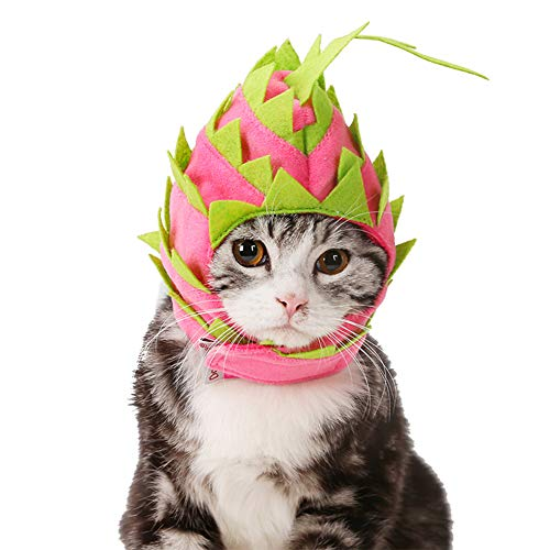 Cuteboom 2019 New Dog Funny Hat Cat Dragon
