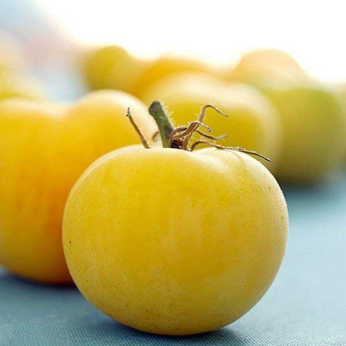 Garden Peach Tomato Seeds #SG11 (Sweet Fruit That Resembles A Large Tomato)