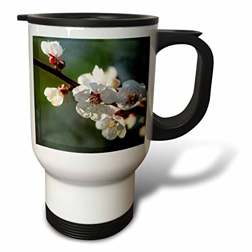 3dRose Alexis Photography - Flowers Sakura Beautiful - Fabulous Japanese apricot flowers against the grey, green background - 14oz Stainless Steel Travel Mug (tm_286680_1) by 3dRose