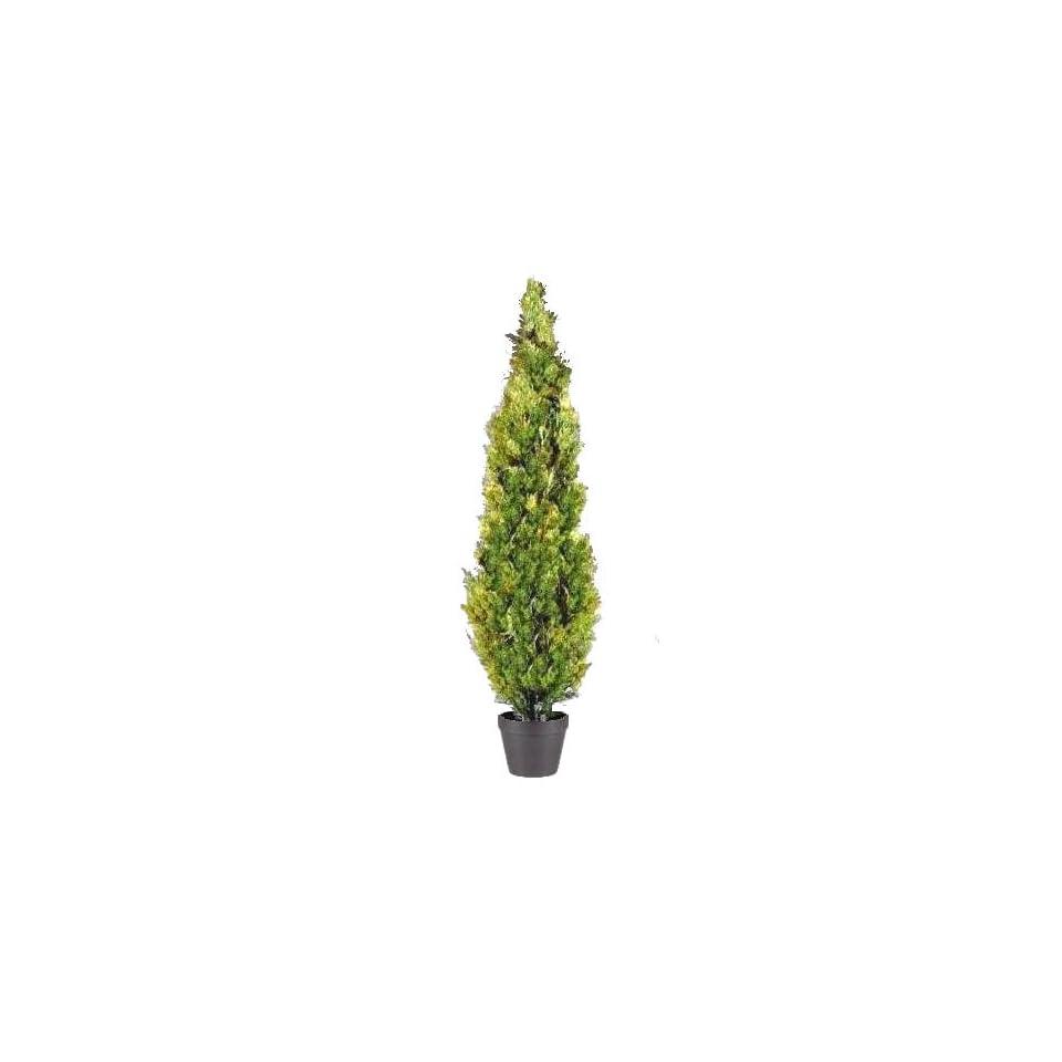 National Tree Company LMC 700 72 72 Inch Arborvitae Tree