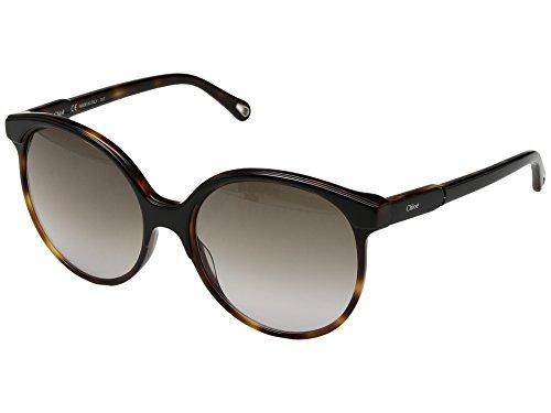 Chloe Women's Quilly - CE733SL Black/Havana One - Chloe Black Sunglasses
