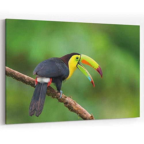 (Toucan Canvas Art Wall Dector,Bird in Costa Rica Painting Wall Art Picture Print on Canvas,36