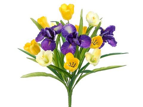 185-TulipIris-Bush-x13-Yellow-Purple-Pack-of-12