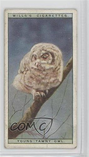 - Young Tawny Owl Ungraded COMC Good to VG-EX (Trading Card) 1925 Wills Life in the Tree Tops - Tobacco [Base] #40