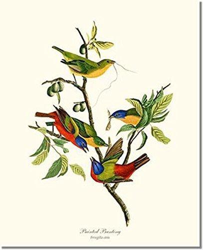 Bird Print Audubon Vintage Art: Painted Bunting - Ready to Frame 5x7 8x10 11x14