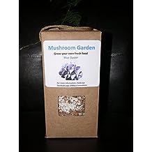 Grow your own mushroom kit - Blue oyster