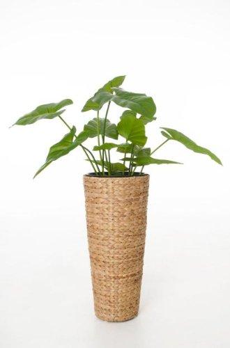VIVANNO Einzel Pflanzkübel Blumenkübel aus Wasserhyazinthe