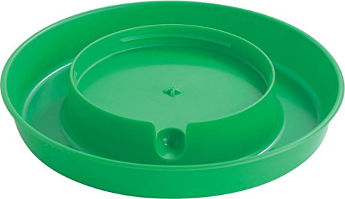 Little Giant Lime Green Screw-On Base for 1-Gallon Plastic Poultry Waterer Waterer Base