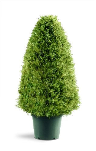 - National Tree 30 Inch Upright Juniper Tree in Green Round Plastic Pot (LCY4-30)