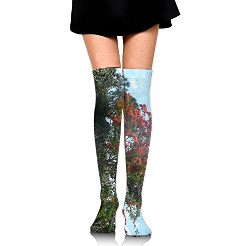 Ranch Royal Poinciana Tree Casual Crew Top Socks,Tube Over Knee Nursing Compression Long Socks,3D Printed Sports For Girls&Women ()