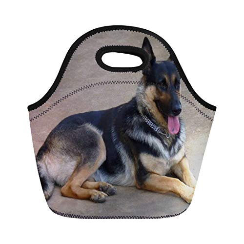 - Ablitt Lunch Bags Puppy German Shepherd Dog Puppies Canine Kennel Club neoprene lunch bag lunchbox tote bag portable picnic bag cooler bag