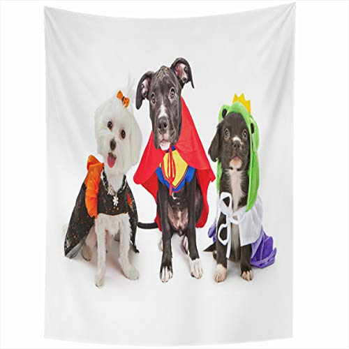 Ahawoso Tapestry 60x80 Inches Three Cute Little Puppy Dogs Dressed Up Costumes Witch Wall Hanging Home Decor Tapestries for Living Room Bedroom Dorm -