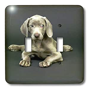 3dRose LLC lsp_1094_2 Weimaraner Puppy, Double Toggle Switch