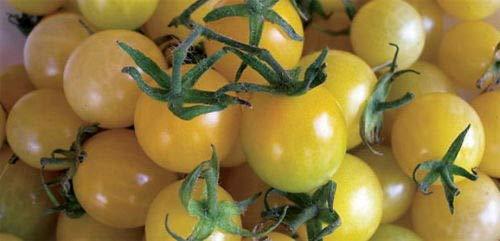 (Vegetable Seeds - 10 Seeds of Lemon Drop Cherry Tomato - Tart & Sweet)
