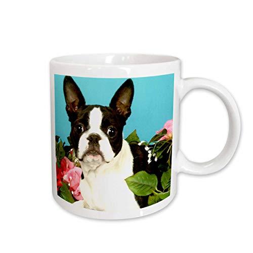 - 3dRose Emma Boston Terrier Ceramic Mug, 15-Ounce