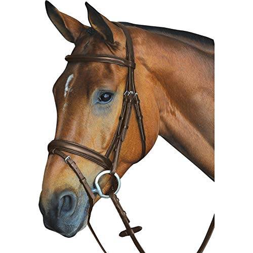 Collegiate Comfort Crown Padded Raised Leather Flash Bridle (Full) (Brown)