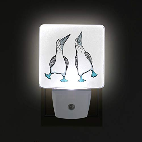 Blue Footed Boobies Birds LED Night Lights with Auto Dusk to Dawn Sensor, Plug-in Warm White Wall Lights for Kids Room