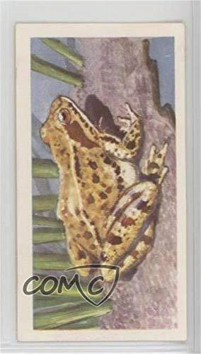 The Common Frog (Trading Card) 1958 Brooke Bond British Wild Life - [Base] #46