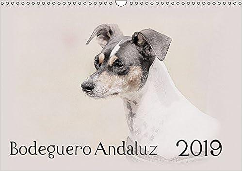 Bodeguero Andaluz 2019 Wandkalender 2019 DIN A3 quer ...