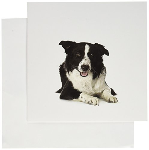 3dRose Border Collie - Greeting Cards, 6 x 6 inches, set of 6 (gc_21077_1) ()