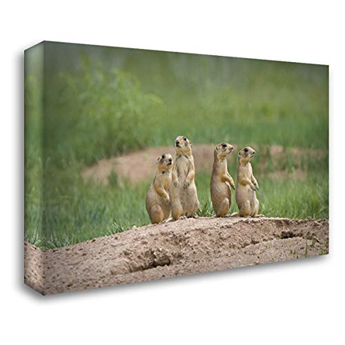 (UT, Bryce Canyon Utah Prairie Dogs by den 38x26 Gallery Wrapped Stretched Canvas Art by Welling, Dave)