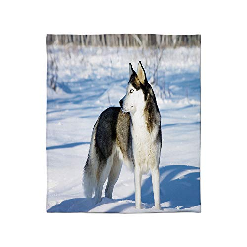 - YOLIYANA Ultra-Soft Flannel Blanket,Alaskan Malamute,for Bed Couch Chair,Size Throw/Twin/Queen/King,Chukchi Husky Breed Dog on Snow Covered