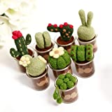 Succulent Cactus Plant Wool Felting Kit in Glass Pots