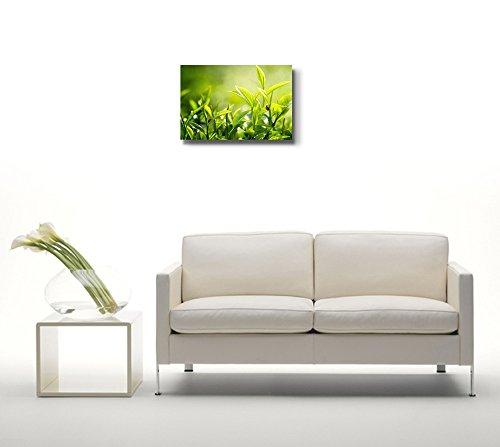 Close Up of Green Tea Leaves Plants Photograph Nature Beauty Wall Decor