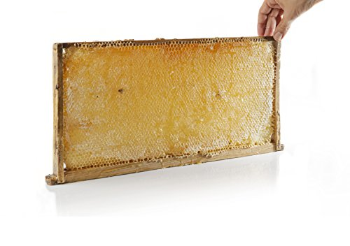 Top 8 raw honeycomb to eat for 2019
