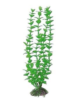 WAVE Rotala Plante Classique pour Aquariophilie Taille L A8011248