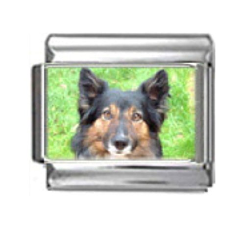 Collie Dog Photo Charm - Stylysh Charms Border Collie Dog Photo Italian 9mm Link DG084