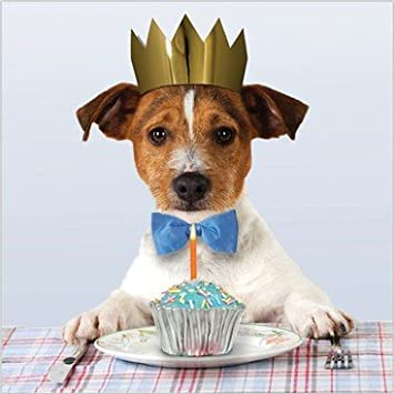 Photographic Greeting Card Aba8681 Humour Birthday Jack Russell