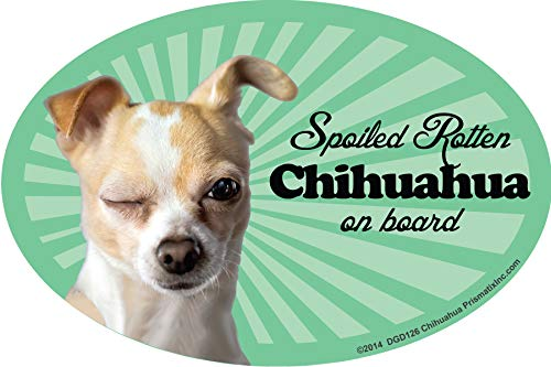 Chihuahua (Apple) Car Magnets: Spoiled Rotten Chihuahua (Apple)- Oval 6