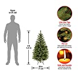 National Tree 4 Foot Aspen Spruce Tree with 100