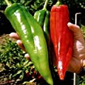 NuMex Big Jim Chili Pepper Seeds ? Organic NuMex Pepper Seeds (10+ seeds) Award Winning 12+ inches long! ? by PowerGrow System