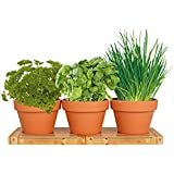 Healthy Kitchen Herb Trio Kit | Easy to Grow Basil, Parsley and Chives Seeds In Your Own Kitchen | Great Mother's Day Gift | Exclusively By TotalGreen Holland
