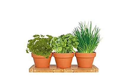 Marvelous Unique Herb Trio Grow Kit | Grow Basil Plant, Parsley And Chives In Your  Kitchen