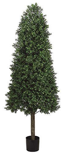 5.5' Cone-Shaped Boxwood Topiary in Plastic Pot Two Tone Green
